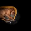 NR Dogs Art Flow Peremes Kutyafekhely S