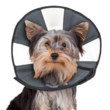 Zencollar Procone (kutya gallér)